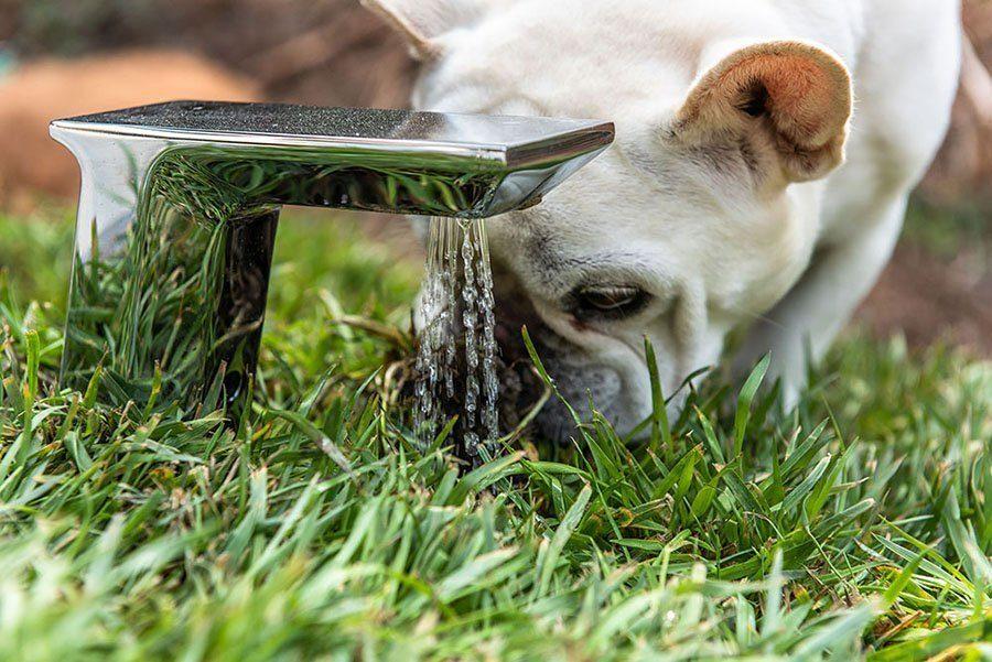 A torneira de irrigação da casa de cachorro com telhado verde