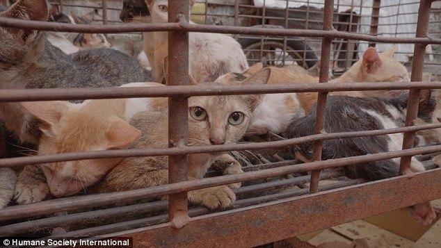 gatos presos