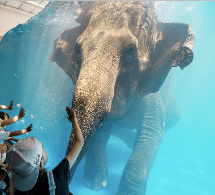 Elefante no zoológico