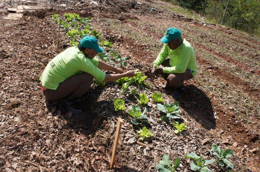 A escola de hortas urbanas deve contar com 40 alunos, em duas turmas de 20