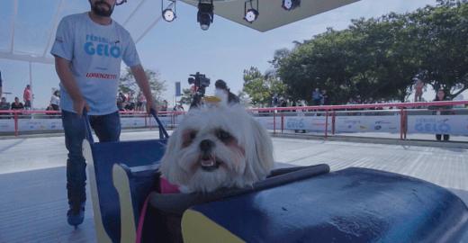 Pista de patinação no gelo gratuita oferece trenó para pets