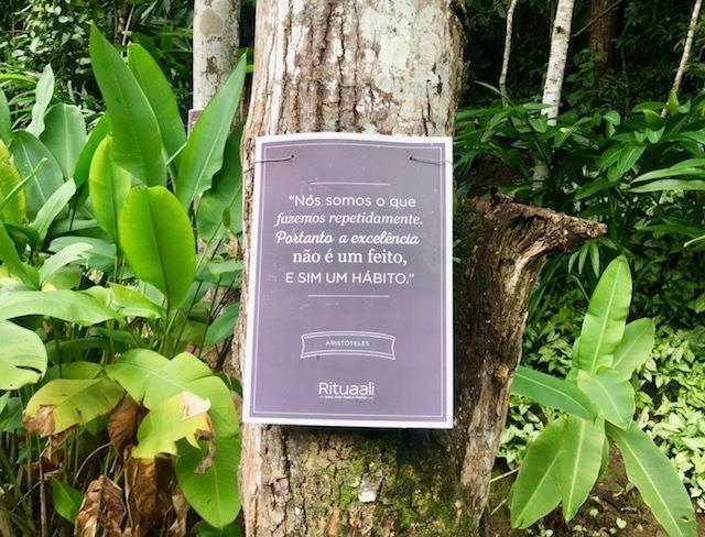 Árvores da sabedoria no jardim do Rituaali