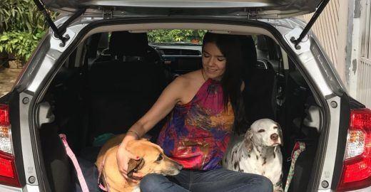 Carro 'pet friendly' vira um apê para viagem com cães grandes