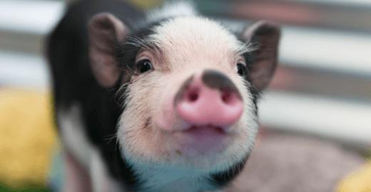 Dia dos Animais: uma data pelo respeito a todos os seres vivos
