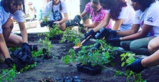 Pesquisador cria hortas urbanas com plantas da Amazônia