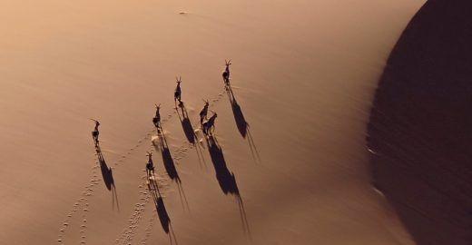 Drone flagra caça ilegal de espécies em extinção na África