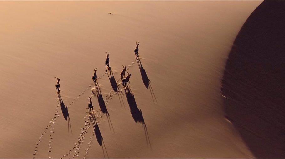 As imagens de drone mostram as belezas da fauna africana e também seus perseguidores