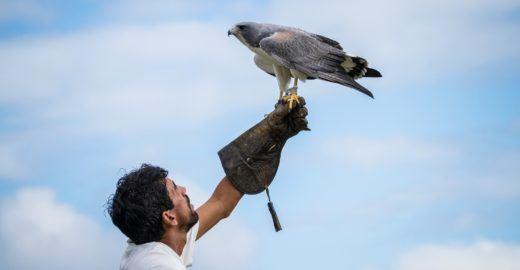 Parque dos Falcões, o santuário das aves de rapina em Sergipe