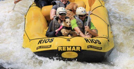 Rafting com cães: veja 8 aventuras pet friendly em Socorro (SP)