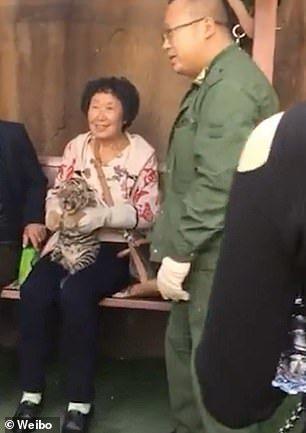 Turistas tiram foto com filhote de tigre