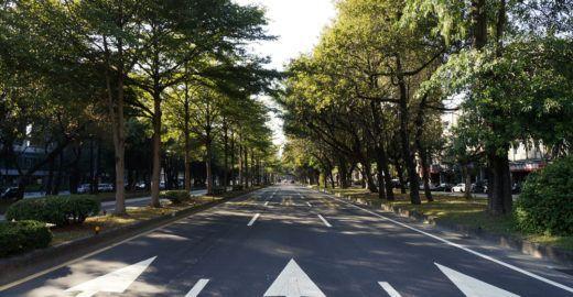 Pesquisas sugerem árvores no tratamento acústico de vias urbanas