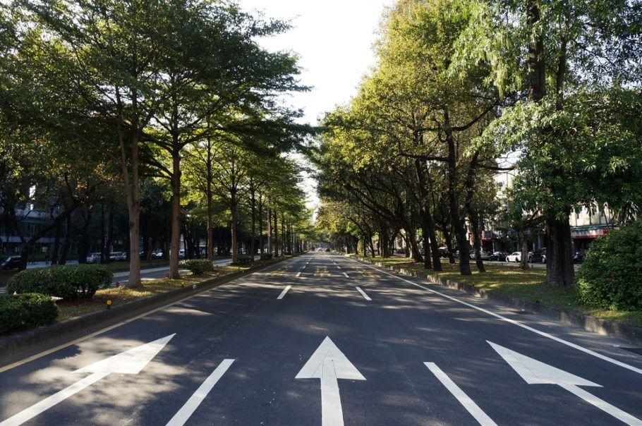 O tratamento acústico contra ruídos urbanos pode ser feito com o plantio de árvores
