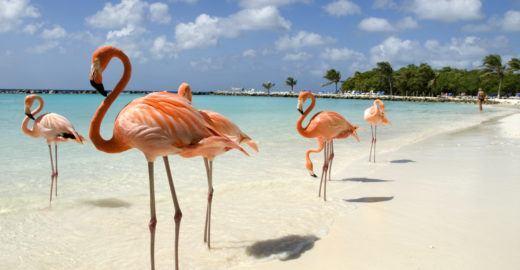Aruba lança promoção para atrair turistas brasileiros