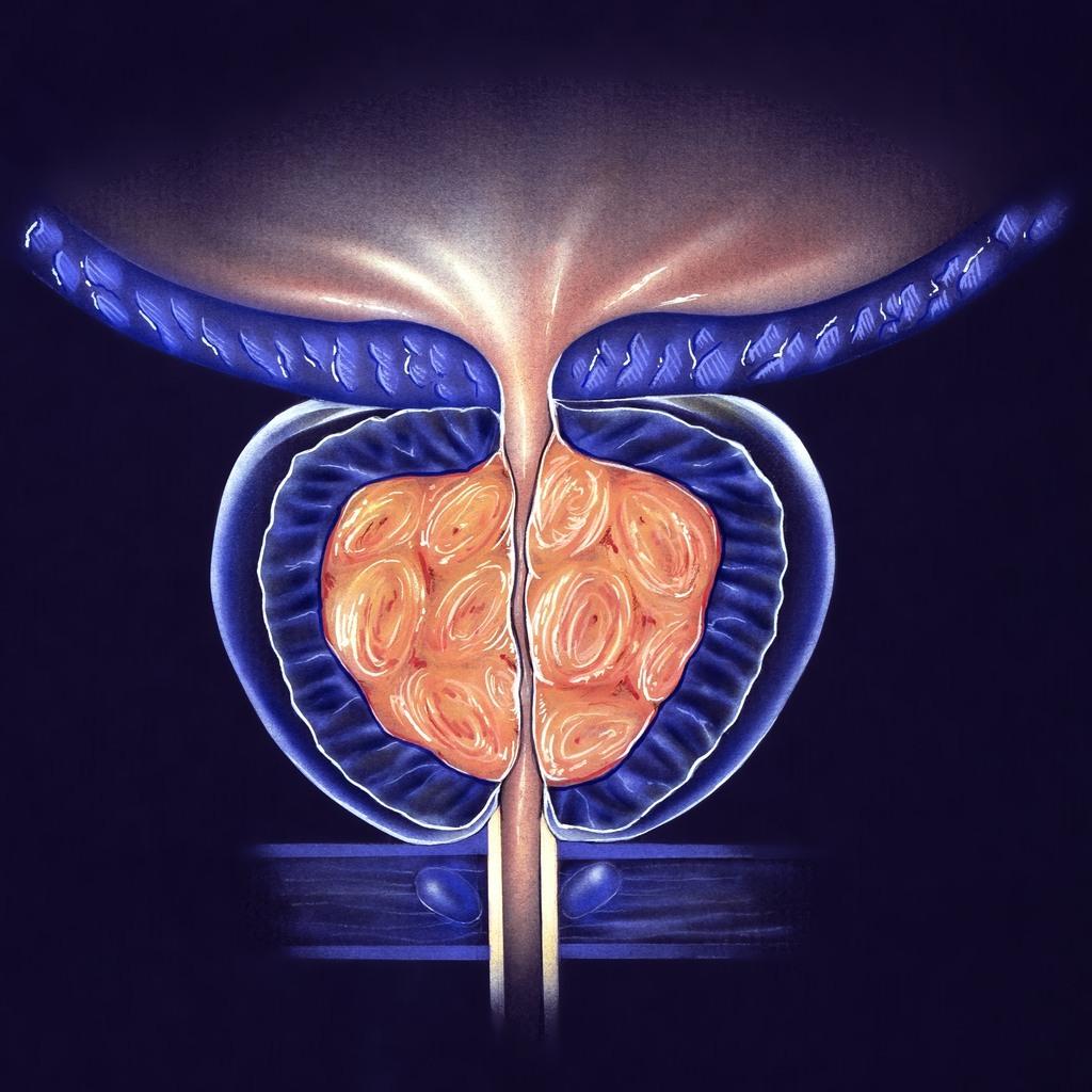 ilustração da próstata