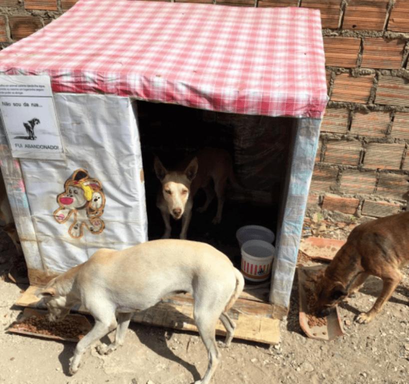Já são três unidades de casa de cachorro de caixas de leite produzidas por uma dona de casa de Teresina