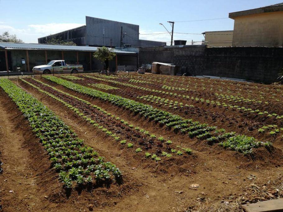 Uma das hortas urbanas orgânicas em São Mateus, zona leste de São Paulo: fonte de alimentos saudáveis e renda