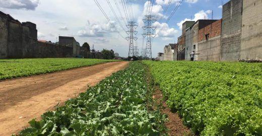 ONG monta hortas orgânicas urbanas em terrenos sem uso