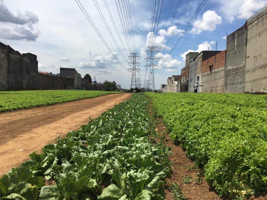 A ONG Cidades Sem Fome cultiva hortas orgânicas urbanas em terrenos das torres de transmissão de energia