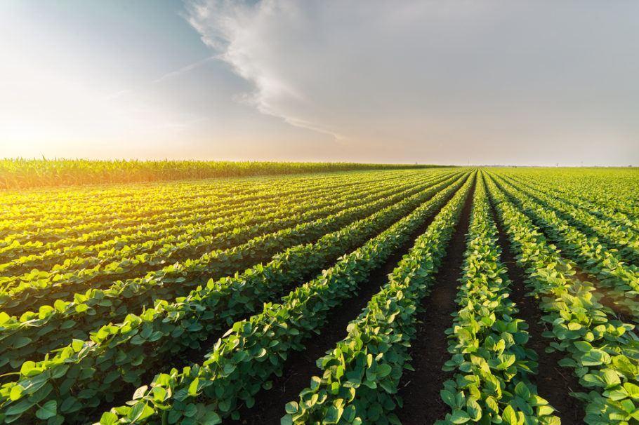 O cultivo de soja, uma das apostas de quem produz transgênicos, usa muitos agrotóxicos, afirma o Idec
