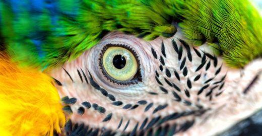 WWF-Brasil faz balanço sobre proteção da biodiversidade no país