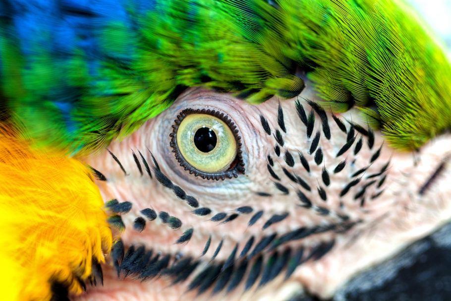 A meta de redução do risco de extinção de espécies avançou, mas centenas de espécies ameaçadas ainda não contam com medidas de proteção