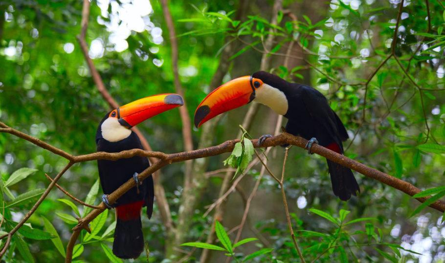 O Brasil é um país megadiverso, que abriga de 10% a 20% das espécies do planeta