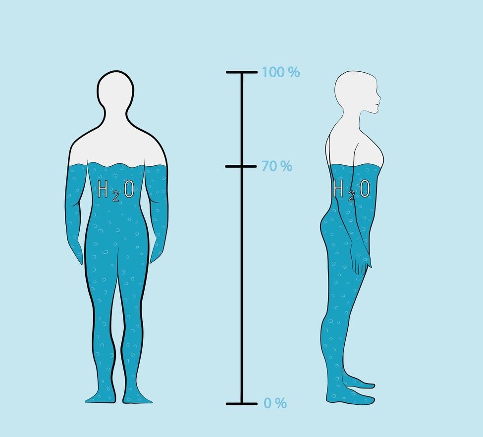 ilustração mostra 70% do corpo com água