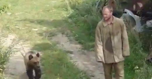 Caçador russo é morto por urso criado para treinar cães de caça