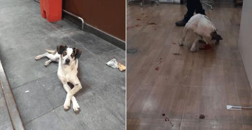 500 mil assinam petição por justiça a cachorro morto no Carrefour