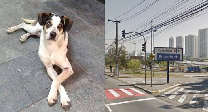 Cachorro morto no Carrefour