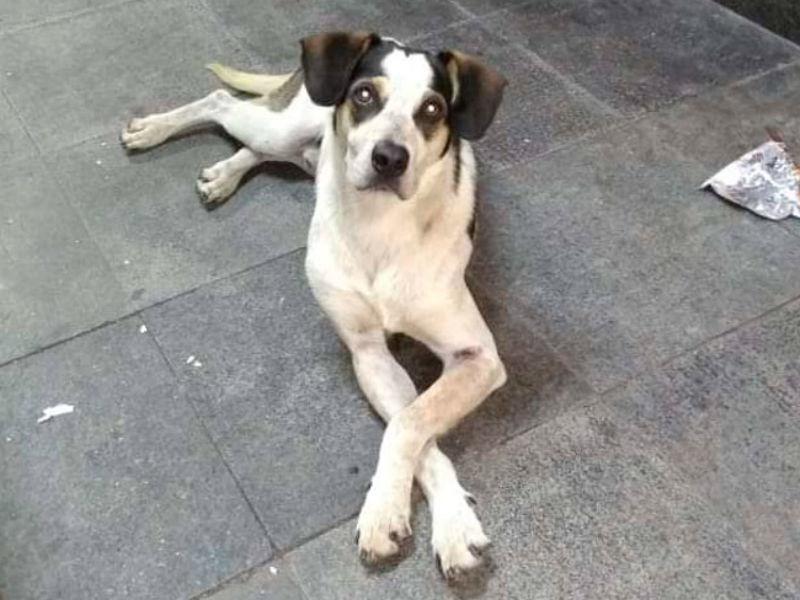 cachorro que foi morto no carrefour