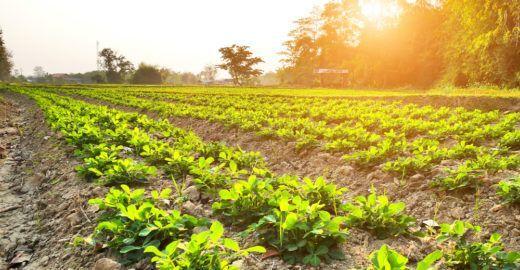 Mapa da soja ajuda na proteção ambiental do cerrado brasileiro