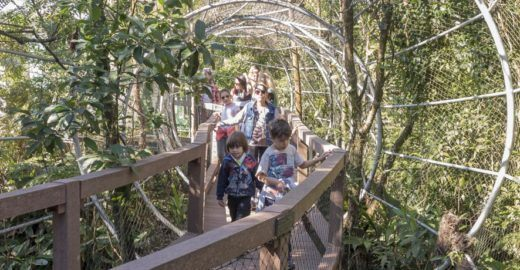 SP ganha parque com elevador e passarela em plena Mata Atlântica