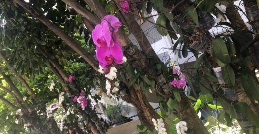 Hospital faz reciclagem de orquídeas descartadas pelos pacientes