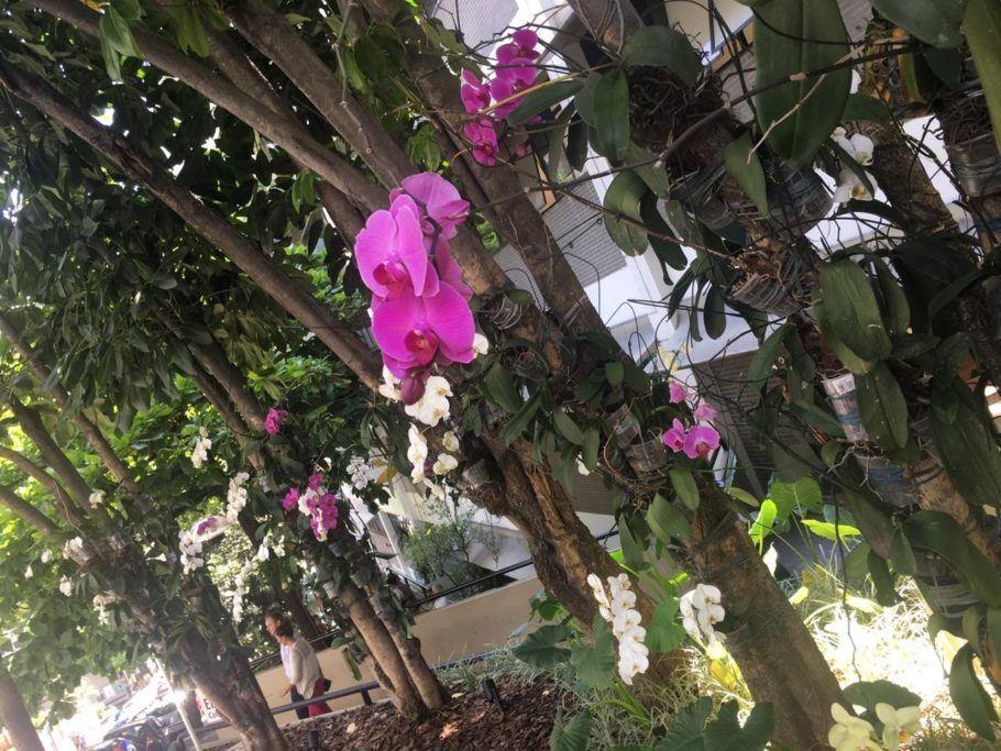 """A reciclagem de orquídeas constrói uma """"parede"""" colorida na passagem dos funcionários"""