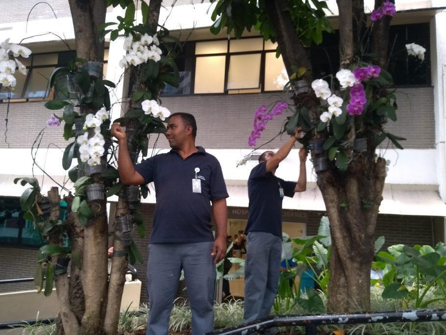 Os jardineiros Jobson (à esq.) e Orlando cuidam da reciclagem de orquídeas