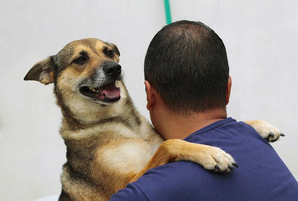 cachorro dando um abraço no tutor