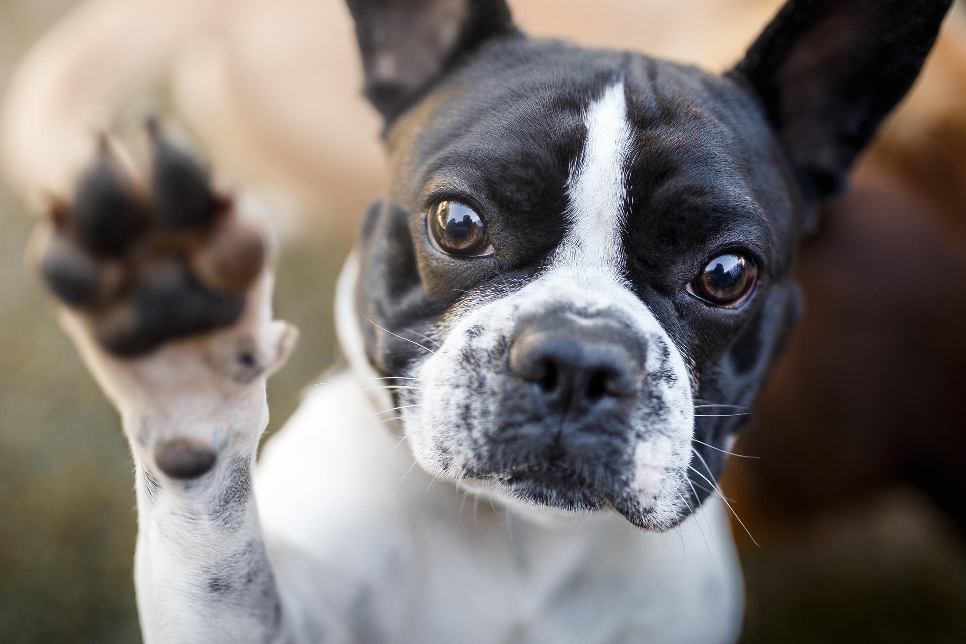 Veterinários recomendam que animais fiquem em lugares frescos, com boa ventilação e água.