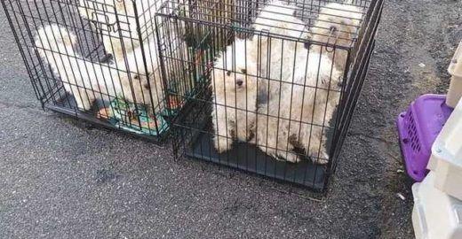 Cachorros presos em gaiolas são encontrados em estacionamento