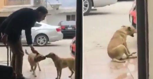 Homem atrai cão fingindo acariciá-lo e o golpeia com facadas