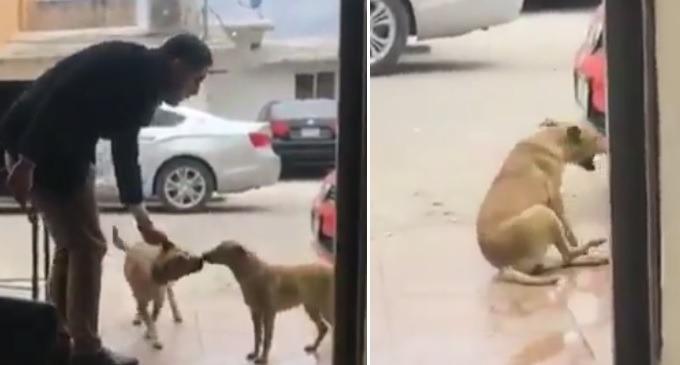 vídeo mostra homem dando facadas em cachorro