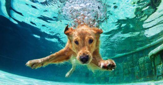Dicas para cuidar dos pets no verão
