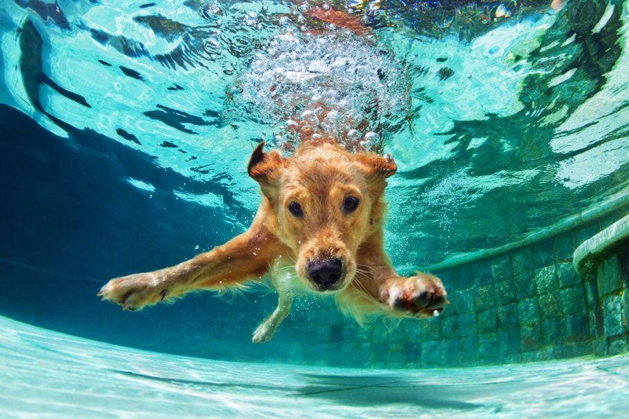 Cachorro na piscina