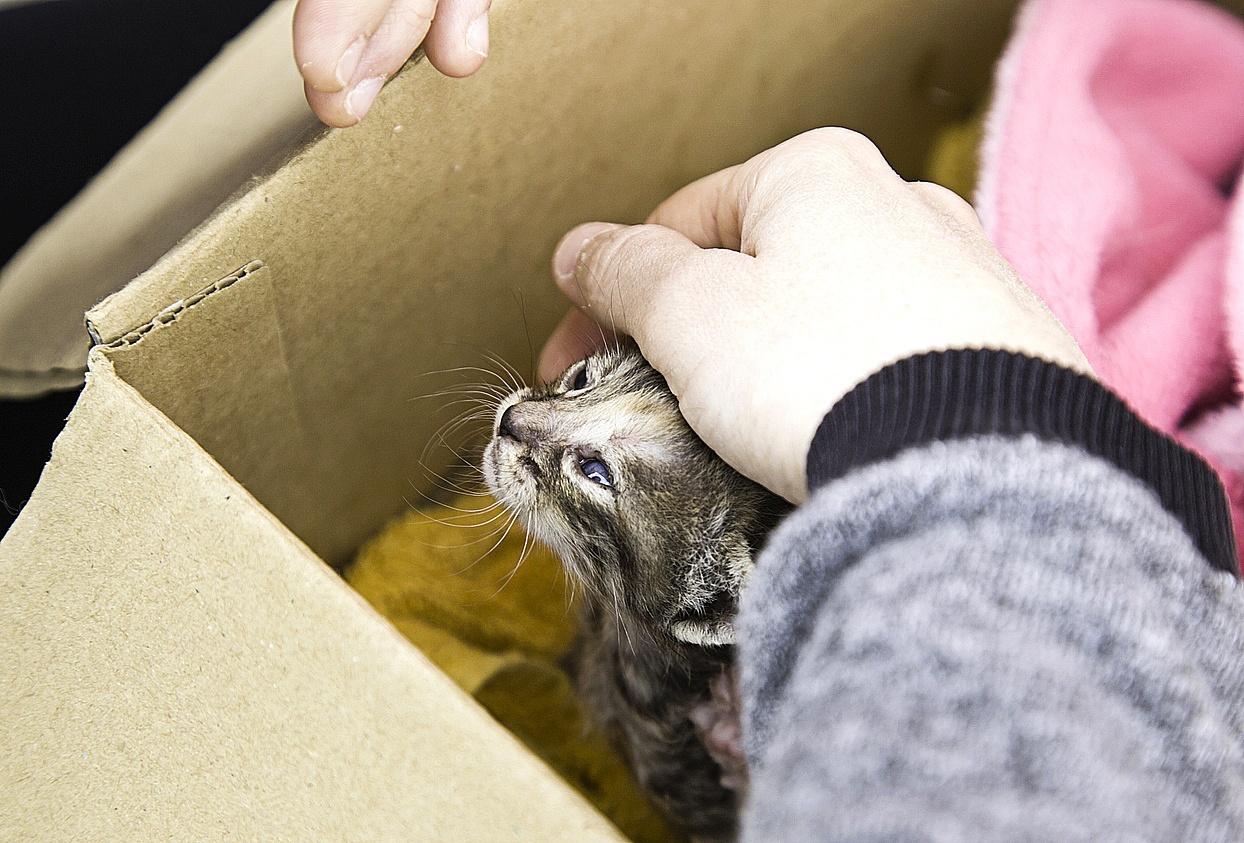 gato filhote em uma caixa