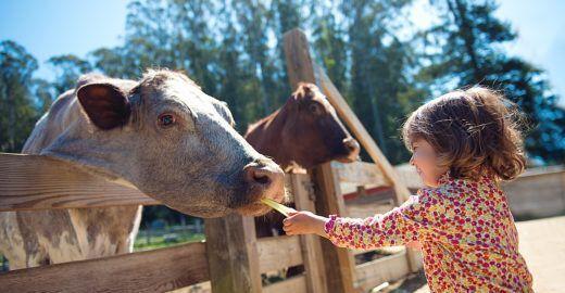 Guia vegetariano para crianças reúne orientações e receitas