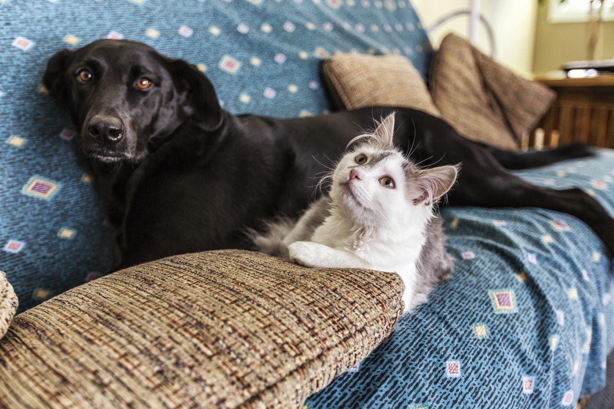 cachorro e gato no sofá