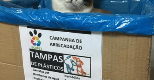 Reciclagem de tampinhas plásticas banca castração de pets sem lar