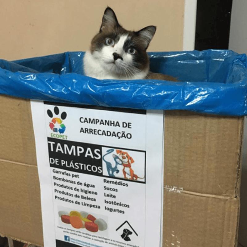 O projeto Ecopet utiliza a reciclagem de tampinhas plásticas para financiar a castração de cães e gatos