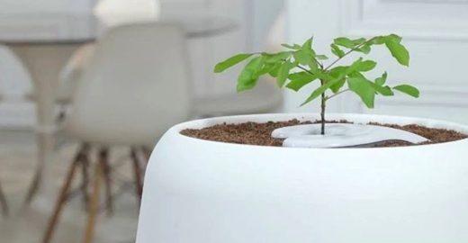 Urna ecológica usa cinzas para alimentar crescimento de árvore