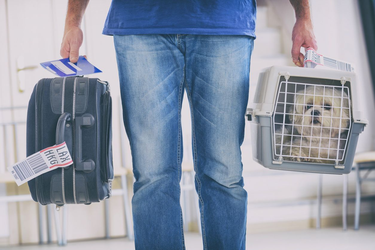 Homem carregando a mala e o cachorro em caixa de transporte